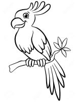 parrot-coloring-pages-12