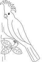parrot-coloring-pages-2