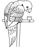 parrot-coloring-pages-21