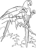 parrot-coloring-pages-3