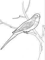 parrot-coloring-pages-5