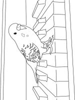 parrot-coloring-pages-7