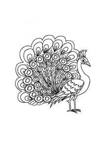 coloring-pages-animals-peacock-10