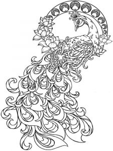 coloring-pages-animals-peacock-12