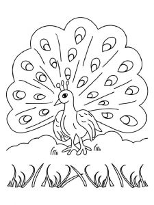 coloring-pages-animals-peacock-14