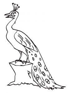 coloring-pages-animals-peacock-4