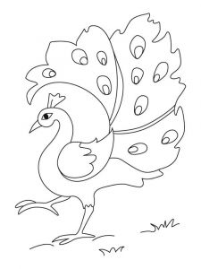 coloring-pages-animals-peacock-8