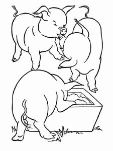 animals-pig-coloring-pages-1
