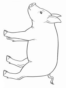 animals-pig-coloring-pages-10
