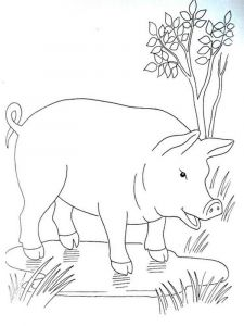animals-pig-coloring-pages-19