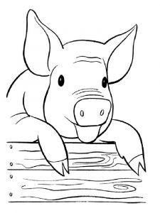 animals-pig-coloring-pages-3