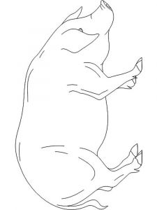 animals-pig-coloring-pages-4