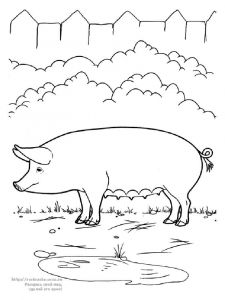animals-pig-coloring-pages-6