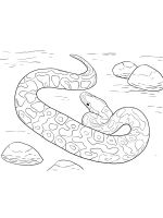 python-coloring-pages-11