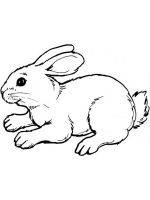 coloring-pages-animals-rabbits-13