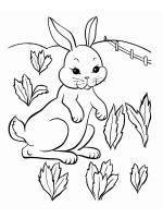 rabbits coloring pages download and print rabbits coloring pages