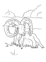 ram-coloring-pages-1