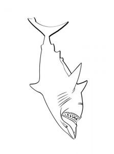 coloring-pages-animals-sharks-6
