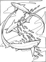 coloring-pages-animals-sharks-8