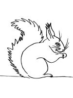 coloring-pages-animals-squirrel-16