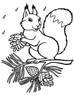 coloring-pages-animals-squirrel-2