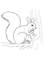 squirrel-coloring-pages-10