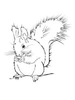 squirrel-coloring-pages-17