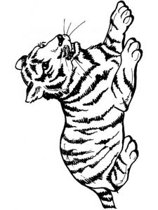 coloring-pages-animals-tiger-14