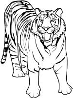 coloring-pages-animals-tiger-3