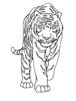 coloring-pages-animals-tiger-8