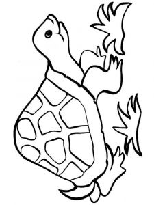 coloring-pages-animals-turtles-16