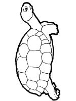 turtles coloring pages download and print turtles coloring pages