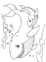 coloring-pages-animals-whale-15