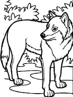 coloring-pages-animals-wolf-10