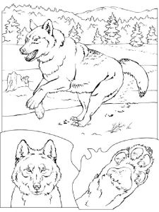 coloring-pages-animals-wolf-11