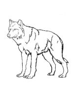 coloring-pages-animals-wolf-3