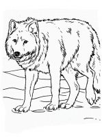 coloring-pages-animals-wolf-5