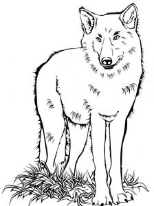coloring-pages-animals-wolf-6