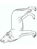 coloring-pages-animals-wolf-9