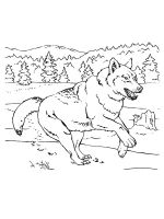 wolf-coloring-pages-21