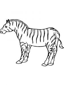 coloring-pages-animals-zebra-9