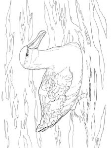 Albatross-birds-coloring-pages-10