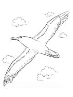Albatross-birds-coloring-pages-13