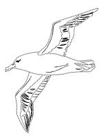 coloring-pages-Albatross-1