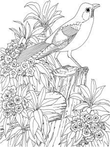Blackbird-birds-coloring-pages-3