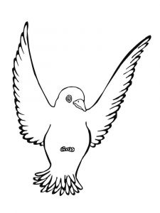 Blackbird-birds-coloring-pages-4