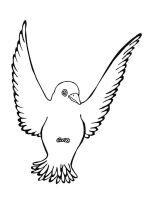 Blackbird-birds-coloring-pages-4