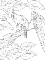 Blackbird-birds-coloring-pages-5