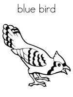 Bluebird-birds-coloring-pages-1