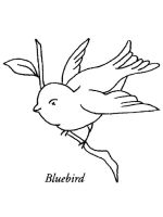 Bluebird-birds-coloring-pages-10